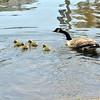 goose 50714_0345 2