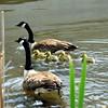 goose 50714_0350 2