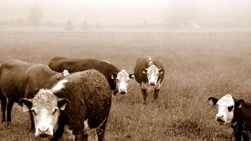 The Ladies of the Pasture