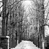 tree row 042515_1001 bw