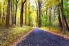 yellow road 101916_3727