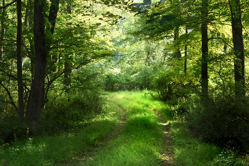 path 091915_7427 2