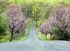 tree 050615_1112 2