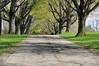 tree row 042716_0107