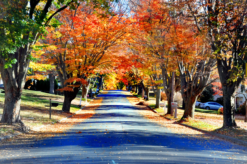 road trees111016_0010