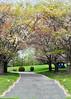 tree blooms 050515_1075 2