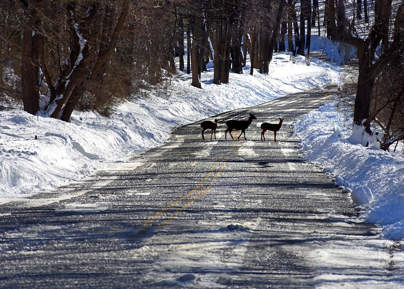 Deer Ice Road  012416_0185 2
