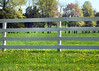 fence 050715_1188 2