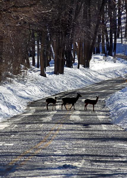 Deer Ice Road  012416_0185