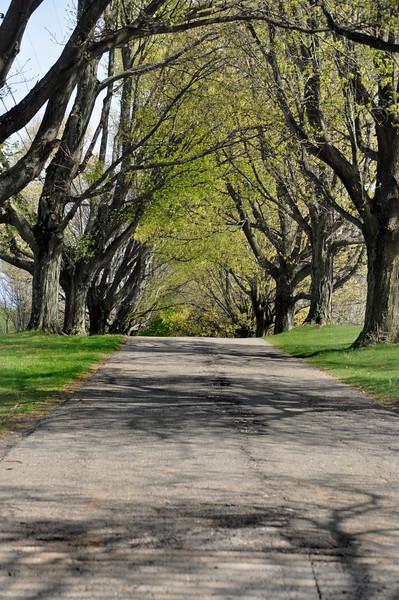 tree row 042716_0108