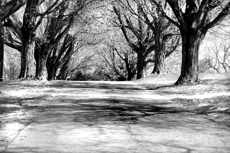 tree row 042716_0107 bw