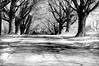 tree row 042716_0107 bw
