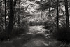 path 091915_7427 2 bw