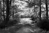 path 091915_7427 2 bw sft