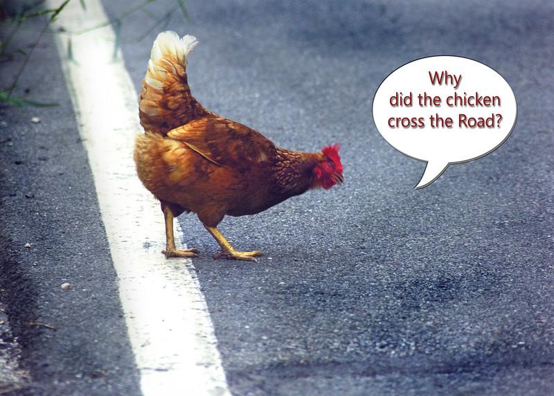 chicken 062615 _3596 text 1