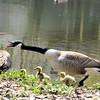 goose 50714_0339 2