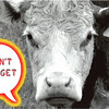 cow - dont forget
