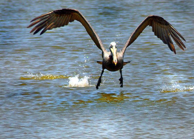 pelican 040212 0383e