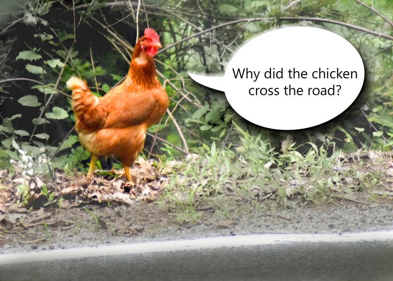 chicken 062615 _3568 2 text 1