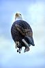 baloon eagle 070407_0129