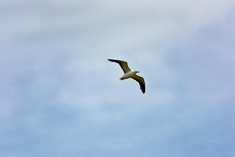 bird 080415 6123e 2