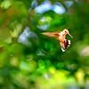 Humbird 072815_0001 3