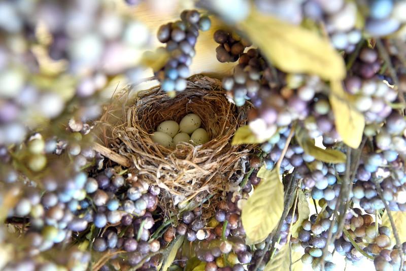 nest 050715_1217
