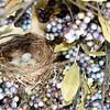nest 050715_1224