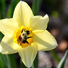 bee daffy 042915_1095 3