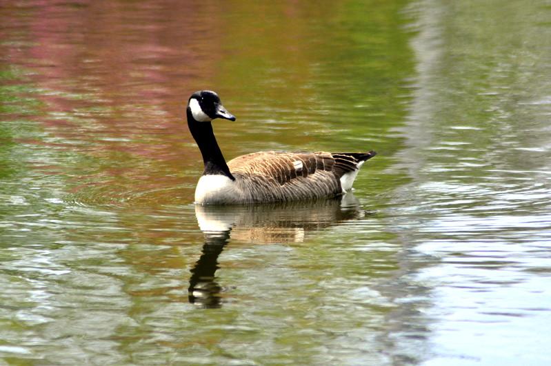goose 50714_0390 2