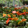 flowers 061415 667_0504