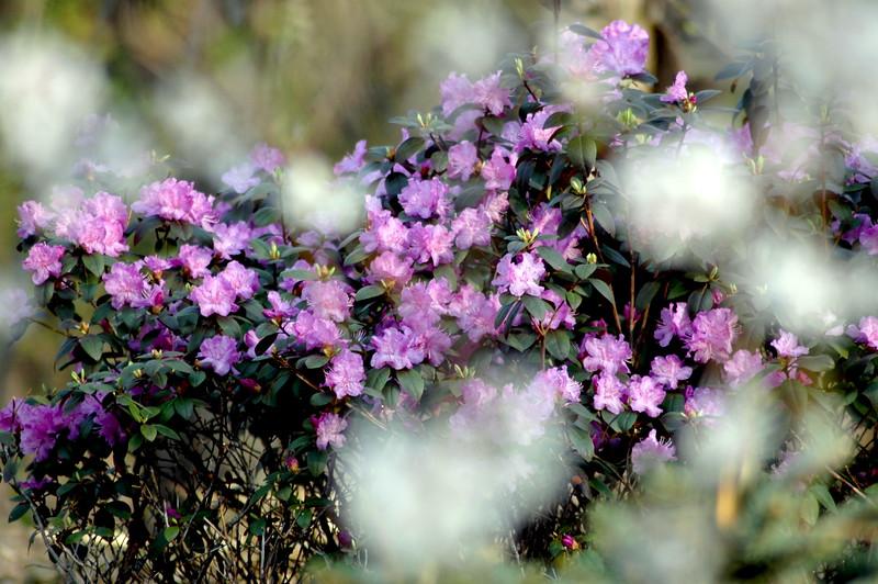 spring flowers_2601