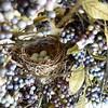 nest 050715_1226