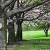 trees 050515_1085 2