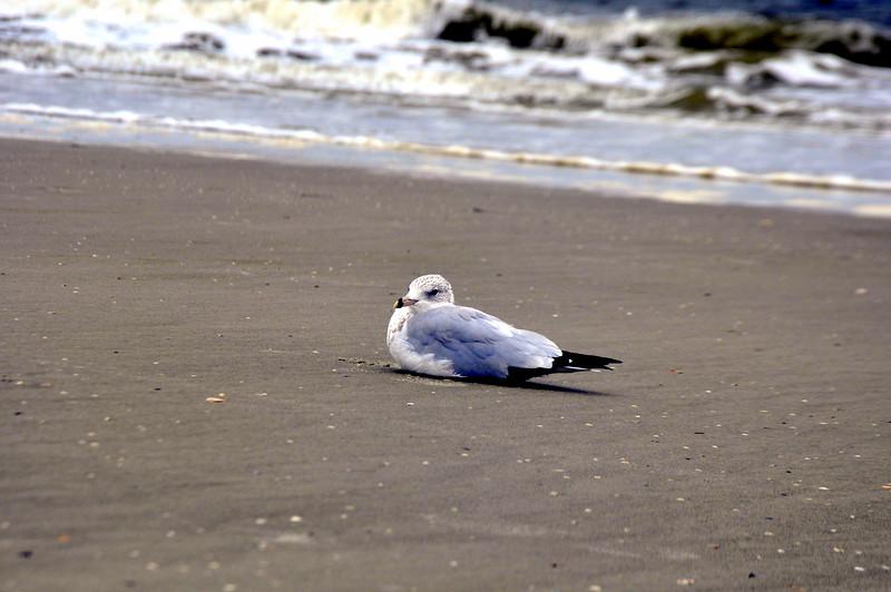 beach 081513_0419