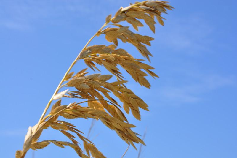 grain 81611_0456