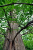 tree 051715_0607