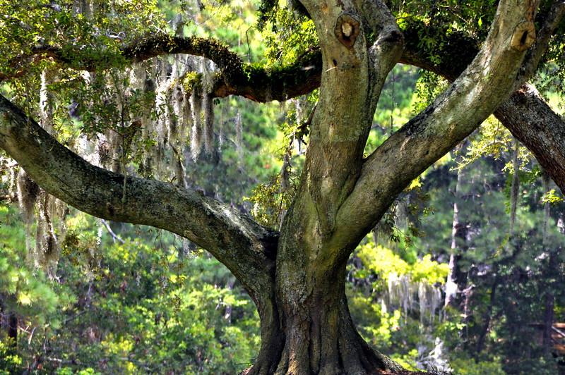 tree 81413_0386