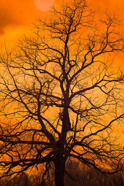 Tree-050514069