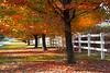 tree row 101916_3759