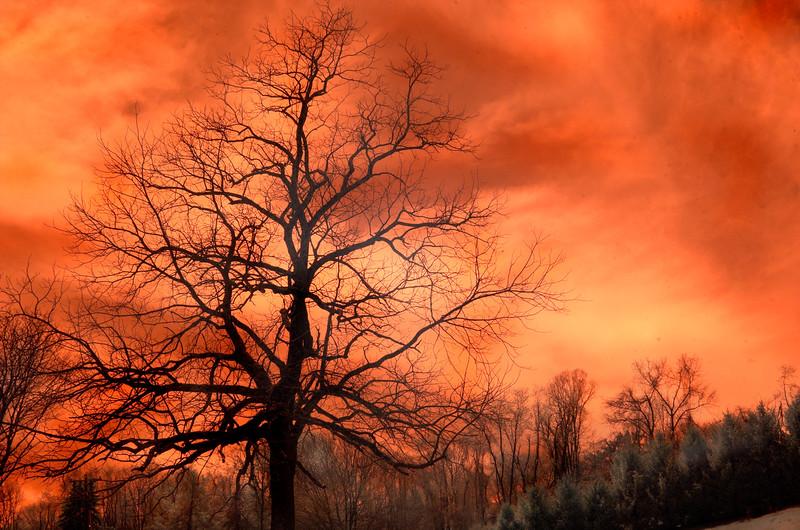 tree 050514065 3b