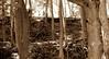 woods sepia