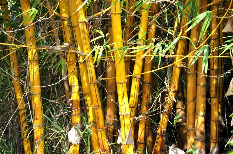 bamboo 030115_0429