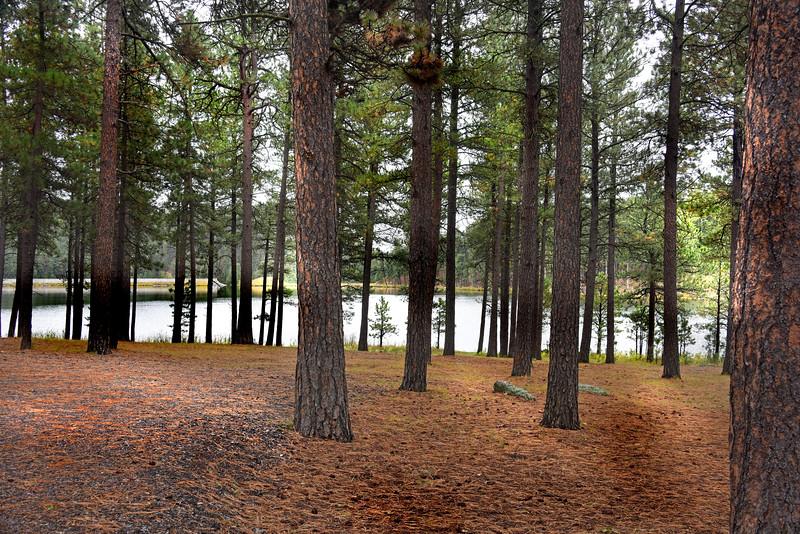 trees 092517_7735