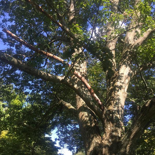 crossing tree_080716 0838