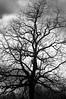Tree 050514 069 bw-050514069