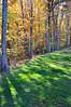 trees 102315_0113