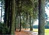 trees 081709_0562 2