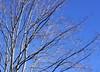 tree 111014_0711 2