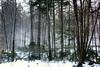 trees snow 022417_4656 wrm